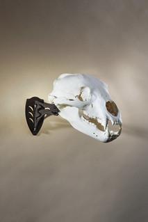 SkullHooker 26