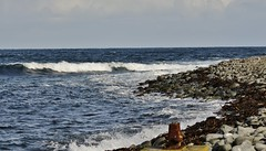 Shoreline Surf _MG_3711