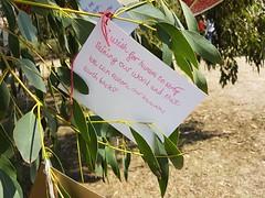 Message on Wishing Tree 1