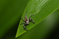 International Jumping Spider Day