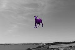 Purple sheep_edited