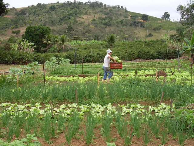 De acordo com uma pesquisa do IBGE, constava-se que 3,6% dos brasileiros tinham insegurança alimentar grave - Créditos: MPA Brasil