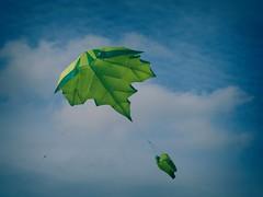 Wie ein Blatt im Wind - Drachen Travemünde | 6. Oktober 2019 | Travemünde - Schleswig-Holstein - Deutschland