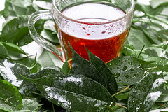 Cup of tea and fresh green leaves with drops of water