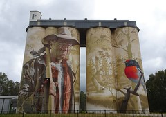 Wirrabara. The evocative and brilliant silo art of Sam Bates.  Depicts the red capped robin of the Wirrabara state forests and a forester with his axe and a robin on his shoulder. .