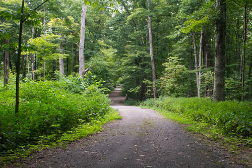 Paoli, IN / Pioneer Mothers' Memorial Forest (#0299)