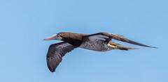 Pelagic Birds