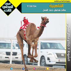 صور سباق الجذاع (الأشواط العامة) المحلي الثالث صباح  12-10-2019