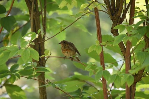 Vogeltjes kijken op de camping