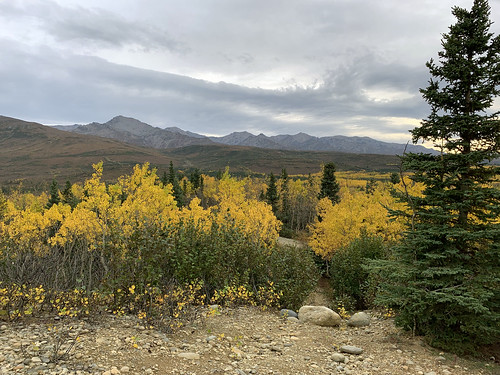 2019 09 06 - Road to Denali Alaska (162)