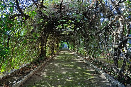 Túnel de ramas