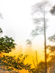 莽山国家森林公园, 湖南,  Mangshan national park, china