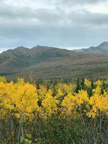 2019 09 06 - Road to Denali Alaska (167)
