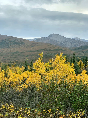 2019 09 06 - Road to Denali Alaska (165)