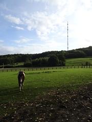 Berthen, l'émetteur du mont des Cats, (4)