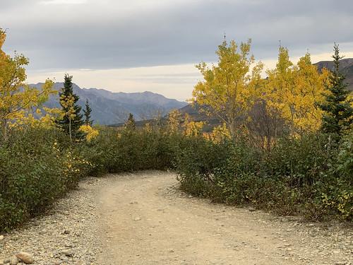 2019 09 06 - Road to Denali Alaska (171)