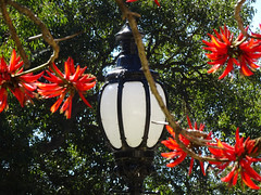 Lamp and Red Flowers