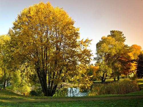 Herbstimpression - Autumn