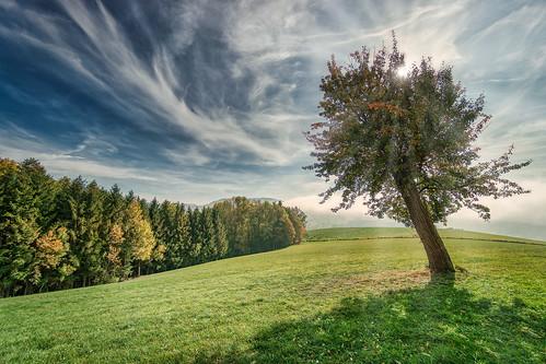 Rudolfshöhe - Baum im Gegenlicht