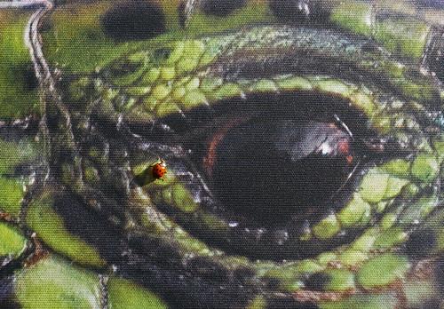 Clin d'oeil d'une coccinelle (1)