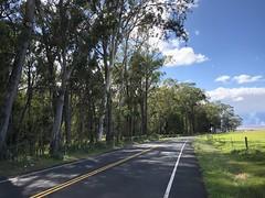 Shady Highway