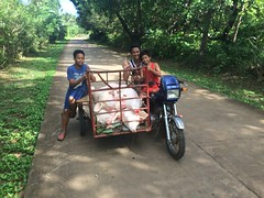Cuyo, going to the market to sell pigs