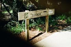 ''Shanon''