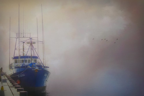 Return of the Tuna Boats
