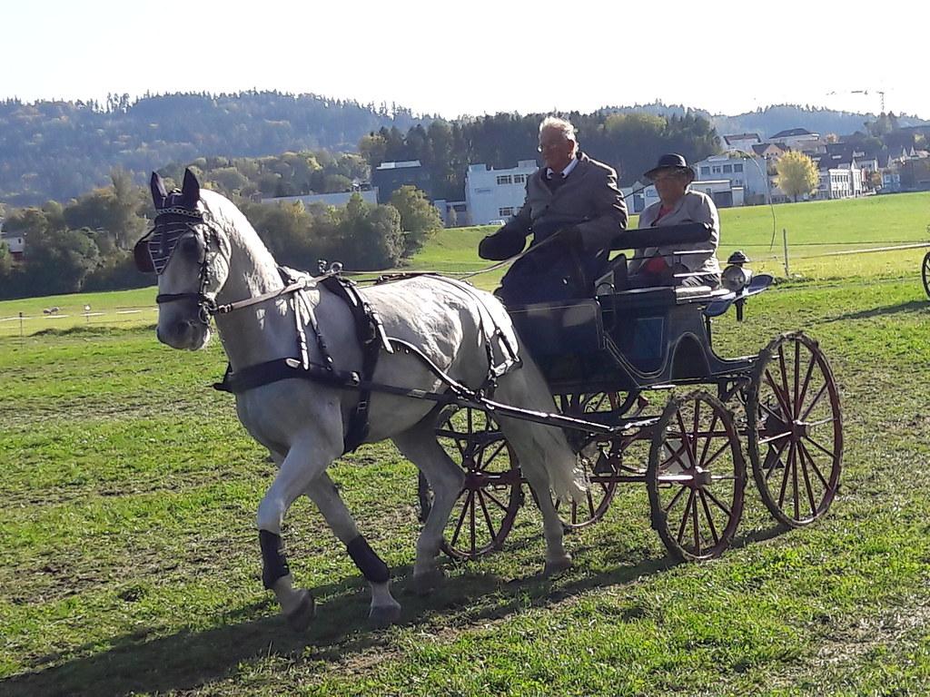 Vereinsturnier Henau 13. Oktober 2019