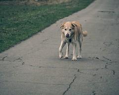 Alter Hund | 2. Februar 2017 | Fehmarn
