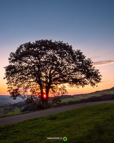 tree@sunrise
