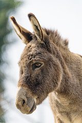 Portrait of a cute donkey