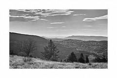 Vosges en N&B