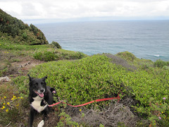 Happy Dog - Wilson Inlet To Sea Return Walk, Bibbulmun Track, Nullaki Peninsula, Western Australia