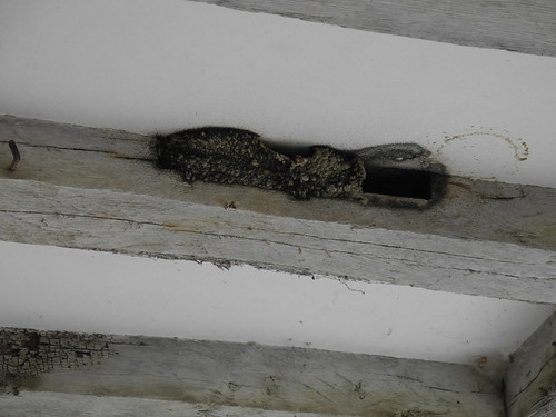 nid d'hirondelles / Schwalbennest / Ласточкино гнездо