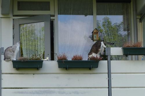 2 katten hebben plezier op het balkon