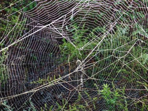 Tela d'aranya / Spider web