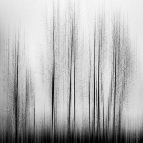 Trees dreaming vertical...