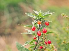 Nature Fruit Bokeh | 3. Oktober 2019 | Fehmarn - Schleswig-Holstein - Deutschland