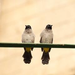 High Couple