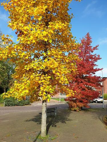 Herfst in Loppersum