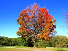 Nethermead. Autumnal Colors