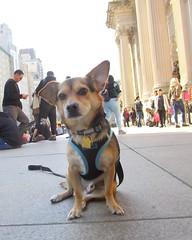 At the Met