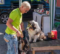 Hunde in Inzell