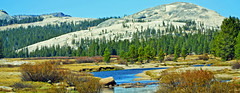 Yosemite High Country, Tuolumne River 10-19