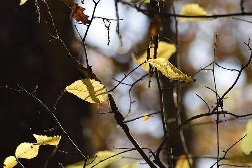 The sweet light of autumn
