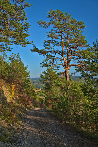 Path near Zeigerheim