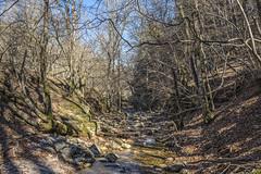 Ruisseau du Vialais