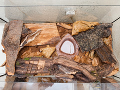 Top view of a terrarium full of bark and dead leaves