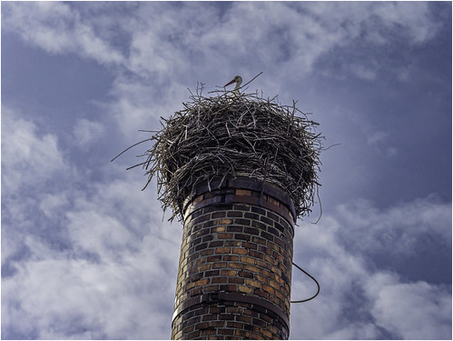 White stork on an inclined curved chimney